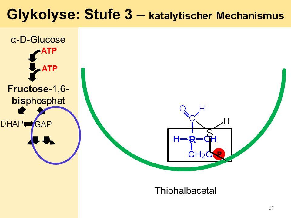 R H Glykolyse: Stufe 3 – katalytischer Mechanismus Thiohalbacetal α-D-Glucose ATP GAP DHAP ATP Fructose-1,6- bisphosphat 17