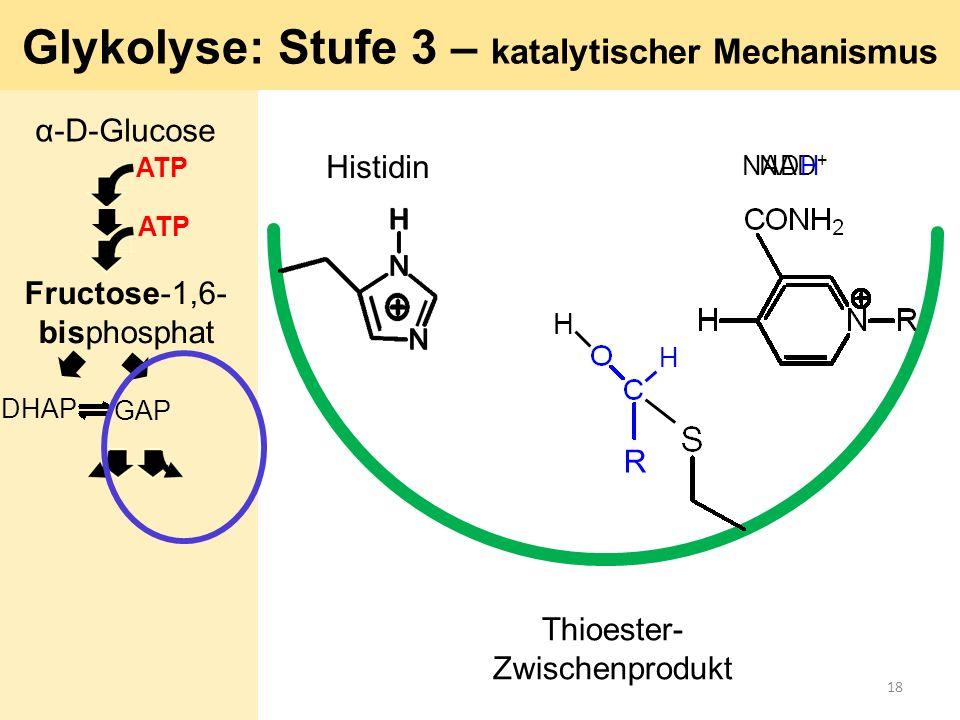 H R H Histidin NAD + Glykolyse: Stufe 3 – katalytischer Mechanismus Thioester- Zwischenprodukt NADH α-D-Glucose ATP GAP DHAP ATP Fructose-1,6- bisphos