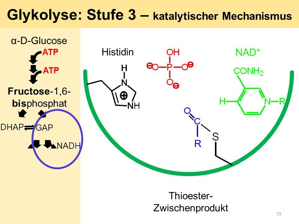 R Histidin NAD + Glykolyse: Stufe 3 – katalytischer Mechanismus H Thioester- Zwischenprodukt α-D-Glucose ATP GAP DHAP ATP Fructose-1,6- bisphosphat NA