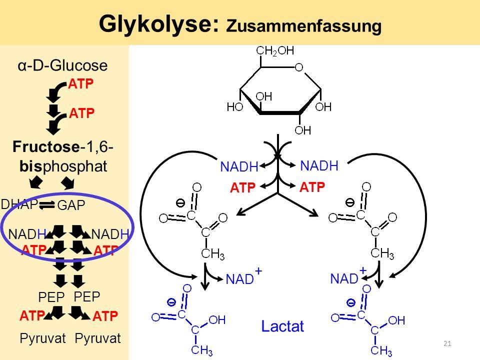 Glykolyse: Zusammenfassung ATP NADH Lactat NAD + α-D-Glucose ATP GAP DHAP ATP Fructose-1,6- bisphosphat NADH ATP PEP Pyruvat PEP Pyruvat ATP 21