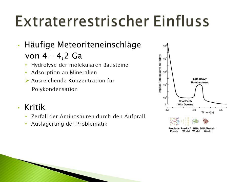 Häufige Meteoriteneinschläge von 4 – 4,2 Ga Hydrolyse der molekularen Bausteine Adsorption an Mineralien Ausreichende Konzentration für Polykondensati