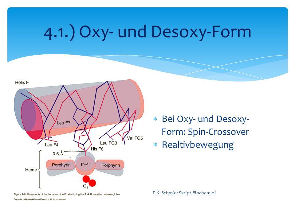 4.1.) Oxy- und Desoxy-Form Bei Oxy- und Desoxy- Form: Spin-Crossover Realtivbewegung F.X. Schmid: Skript Biochemie I