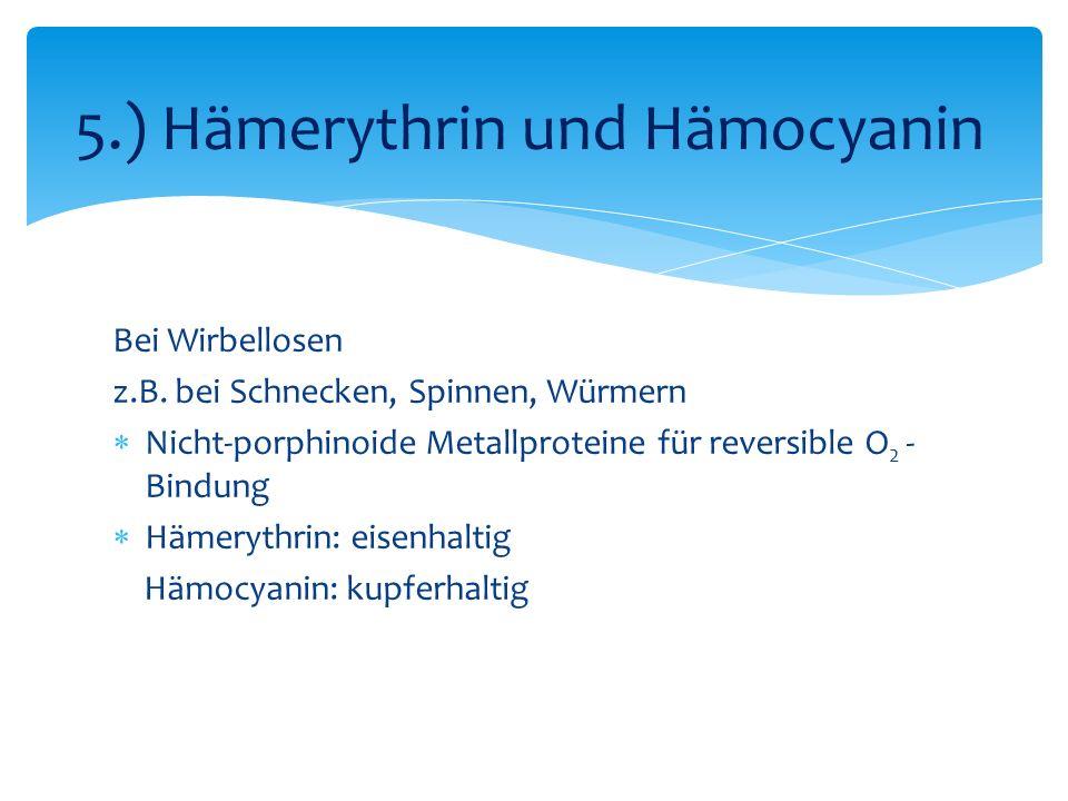 Bei Wirbellosen z.B. bei Schnecken, Spinnen, Würmern Nicht-porphinoide Metallproteine für reversible O 2 - Bindung Hämerythrin: eisenhaltig Hämocyanin