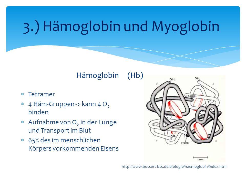 3.) Hämoglobin und Myoglobin Hämoglobin Tetramer 4 Häm-Gruppen -> kann 4 O 2 binden Aufnahme von O 2 in der Lunge und Transport im Blut 65% des im menschlichen Körpers vorkommenden Eisens (Hb) http://www.bossert-bcs.de/biologie/haemoglobin/index.htm
