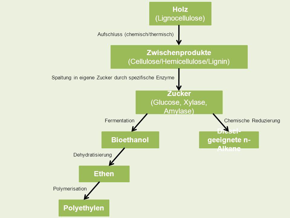 Holz (Lignocellulose) Zwischenprodukte (Cellulose/Hemicellulose/Lignin) Zucker (Glucose, Xylase, Amylase) Bioethanol Diesel- geeignete n- Alkane Ethen