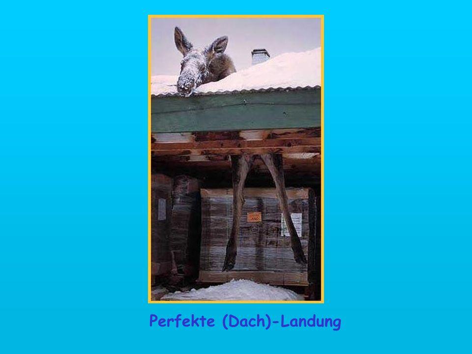 Perfekte (Dach)-Landung
