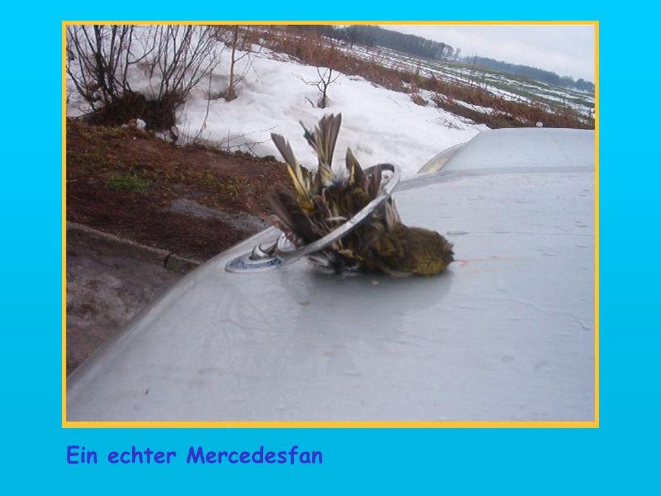 Ein echter Mercedesfan