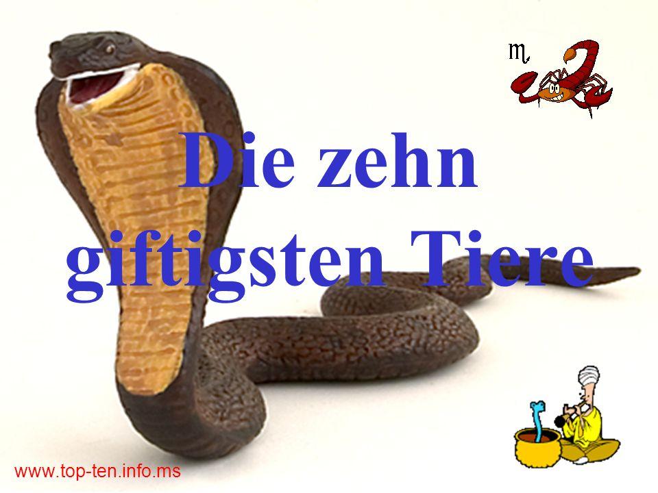 www.top-ten.info.ms Die Krustenanemone (Palythoa tuberculosa bzw.