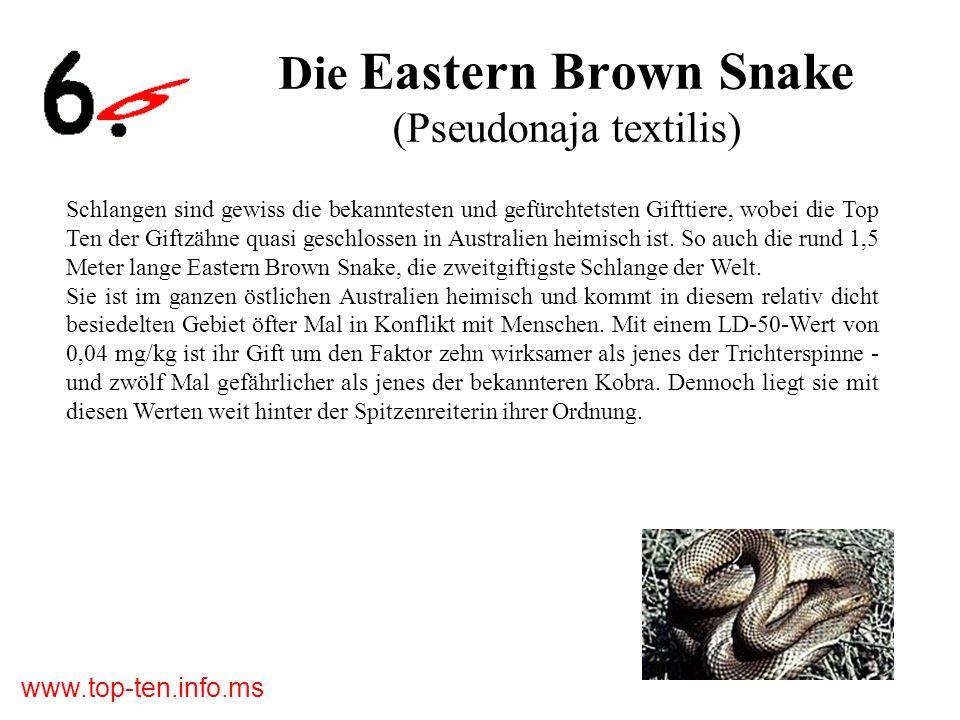 www.top-ten.info.ms Die Eastern Brown Snake (Pseudonaja textilis) Schlangen sind gewiss die bekanntesten und gefürchtetsten Gifttiere, wobei die Top Ten der Giftzähne quasi geschlossen in Australien heimisch ist.