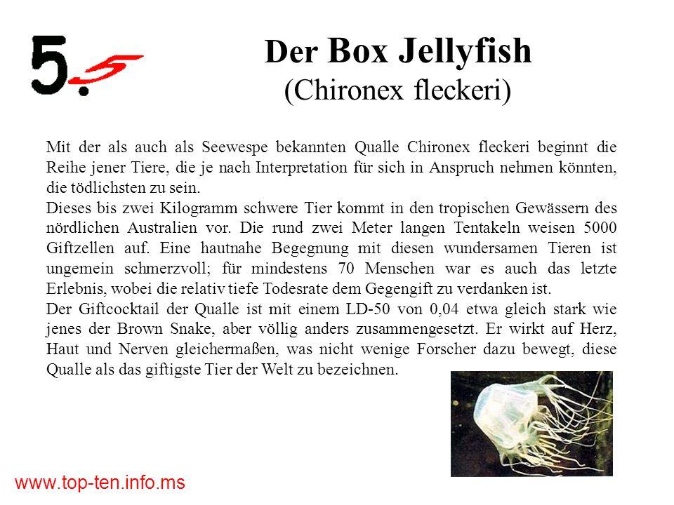 www.top-ten.info.ms Der Box Jellyfish (Chironex fleckeri) Mit der als auch als Seewespe bekannten Qualle Chironex fleckeri beginnt die Reihe jener Tiere, die je nach Interpretation für sich in Anspruch nehmen könnten, die tödlichsten zu sein.