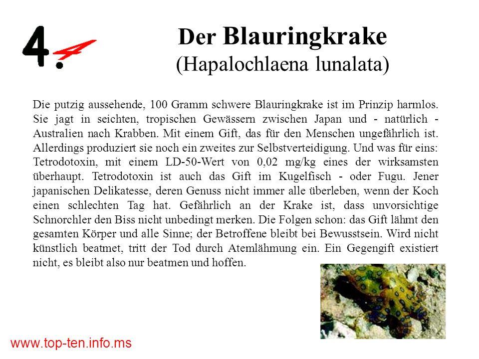 www.top-ten.info.ms Der Blauringkrake (Hapalochlaena lunalata) Die putzig aussehende, 100 Gramm schwere Blauringkrake ist im Prinzip harmlos.