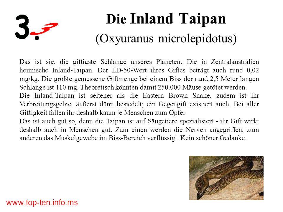 www.top-ten.info.ms Die Inland Taipan (Oxyuranus microlepidotus) Das ist sie, die giftigste Schlange unseres Planeten: Die in Zentralaustralien heimische Inland-Taipan.