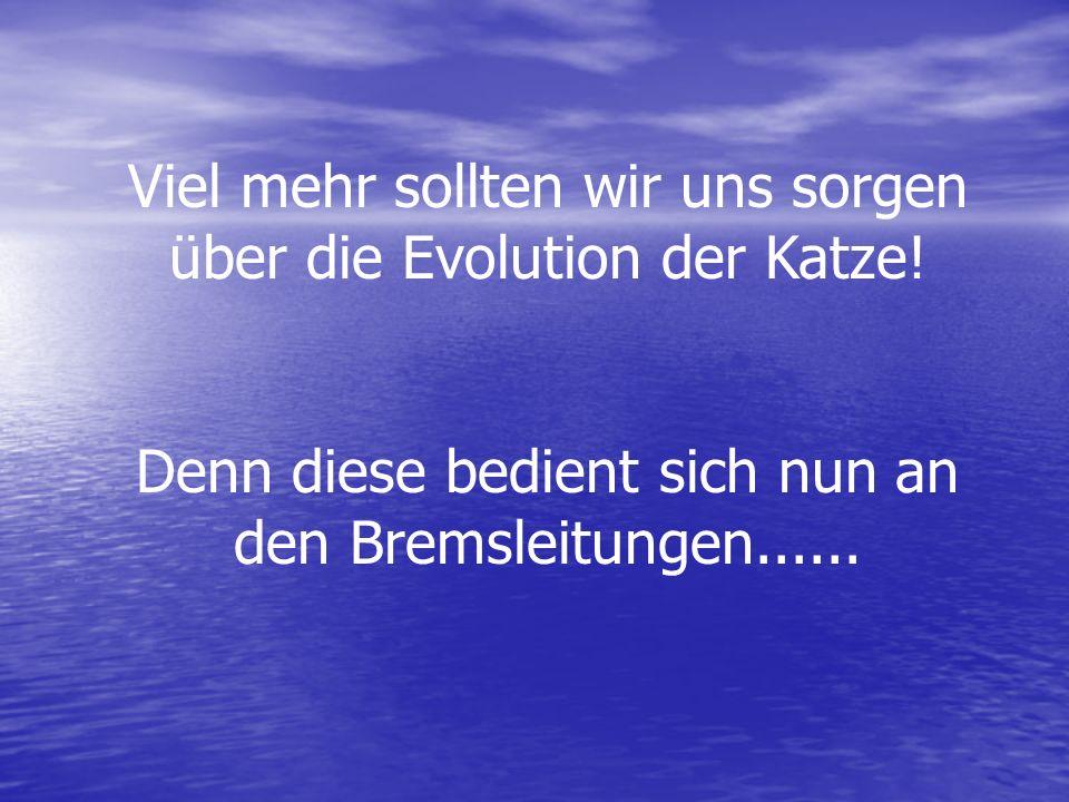 Viel mehr sollten wir uns sorgen über die Evolution der Katze! Denn diese bedient sich nun an den Bremsleitungen......