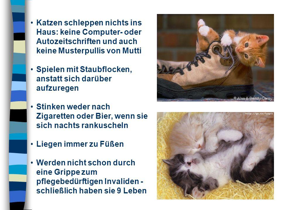 Katzen schleppen nichts ins Haus: keine Computer- oder Autozeitschriften und auch keine Musterpullis von Mutti Spielen mit Staubflocken, anstatt sich