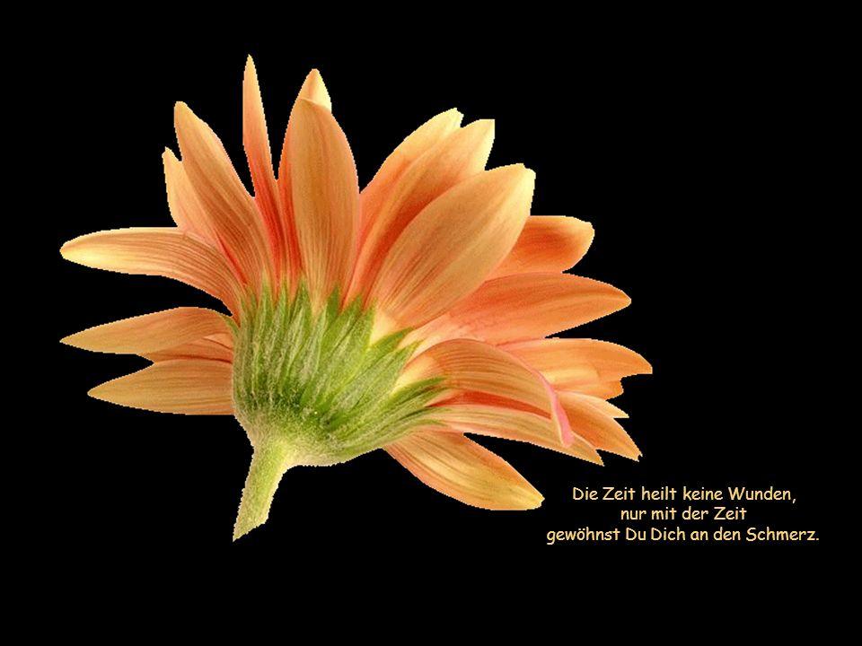 Die Zeit heilt keine Wunden, nur mit der Zeit gewöhnst Du Dich an den Schmerz.