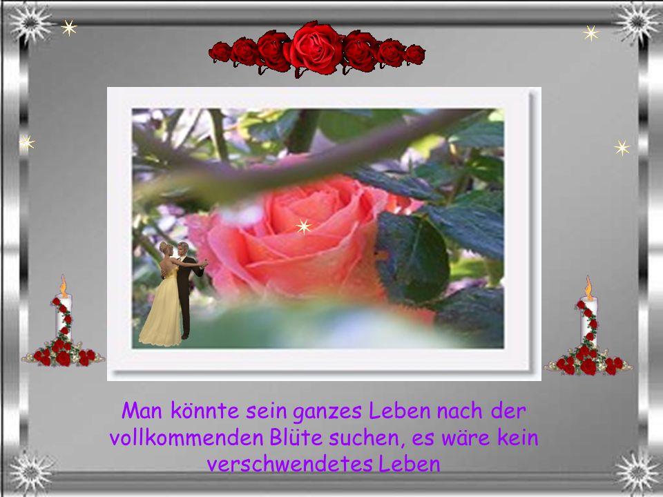 Nimm Dir Zeit, um die Rosen zu sehen
