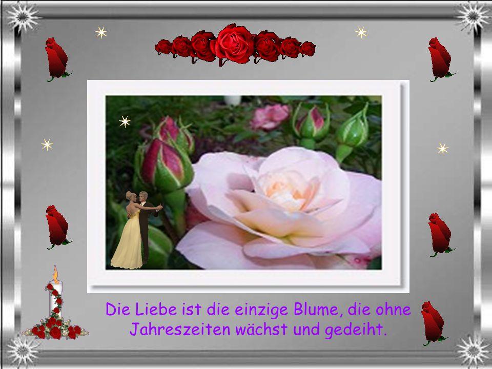 Es ist wichtiger, dass jemand sich über eine Rosenblüte freut, als das er ihre Wurzel unter das Mikroskop bringt.