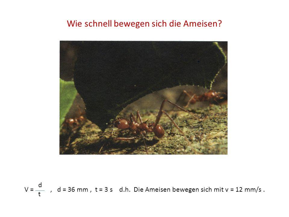 Wie schnell bewegen sich die Ameisen? V =, d = 36 mm, t = 3 s d.h. Die Ameisen bewegen sich mit v = 12 mm/s. t d