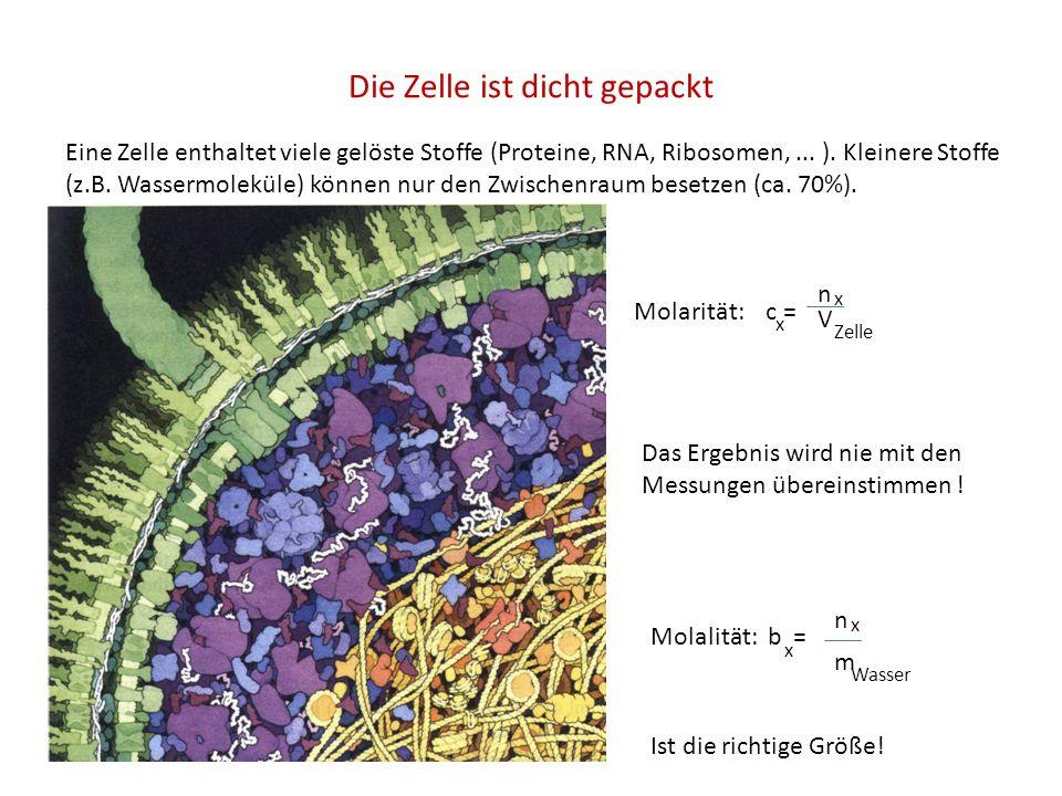 Die Zelle ist dicht gepackt Eine Zelle enthaltet viele gelöste Stoffe (Proteine, RNA, Ribosomen,... ). Kleinere Stoffe (z.B. Wassermoleküle) können nu
