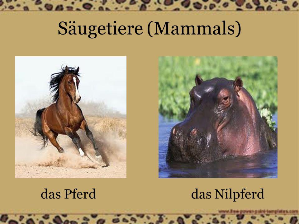 Säugetiere (Mammals) das Pferddas Nilpferd
