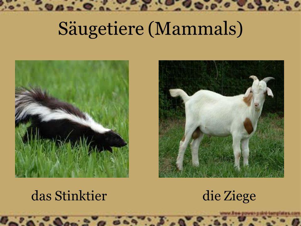 Säugetiere (Mammals) das Stinktierdie Ziege