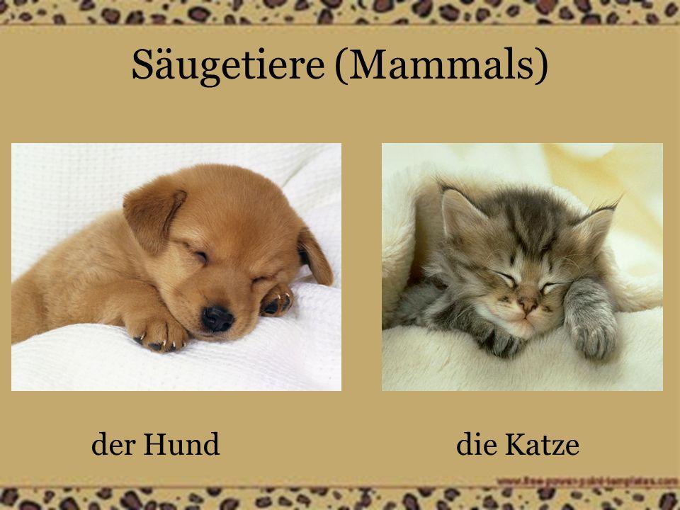 Säugetiere (Mammals) der Hunddie Katze