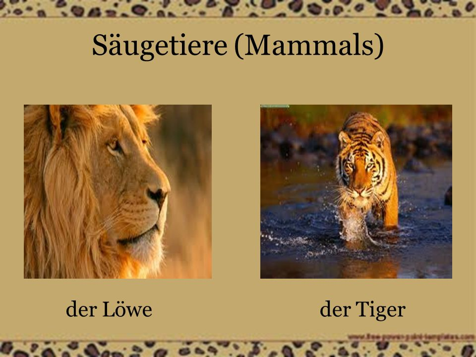 Säugetiere (Mammals) der Wolfder Waschbär