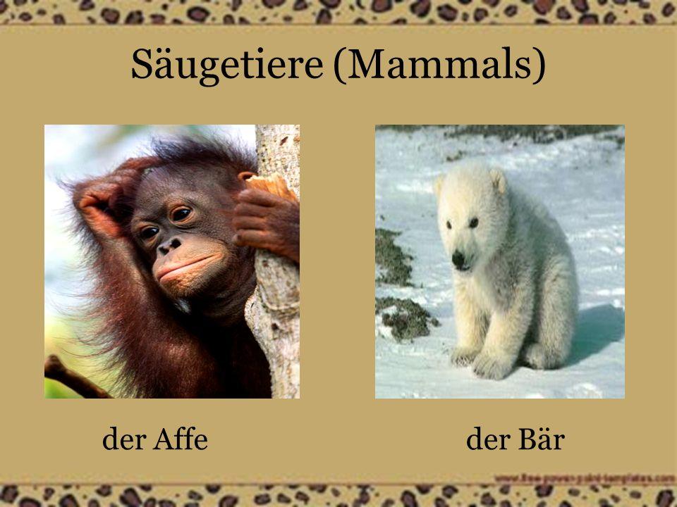 Säugetiere (Mammals) der Affeder Bär