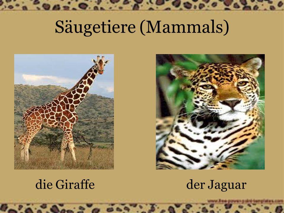Säugetiere (Mammals) die Giraffeder Jaguar