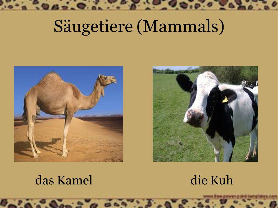 Säugetiere (Mammals) das Lammdas Schaf