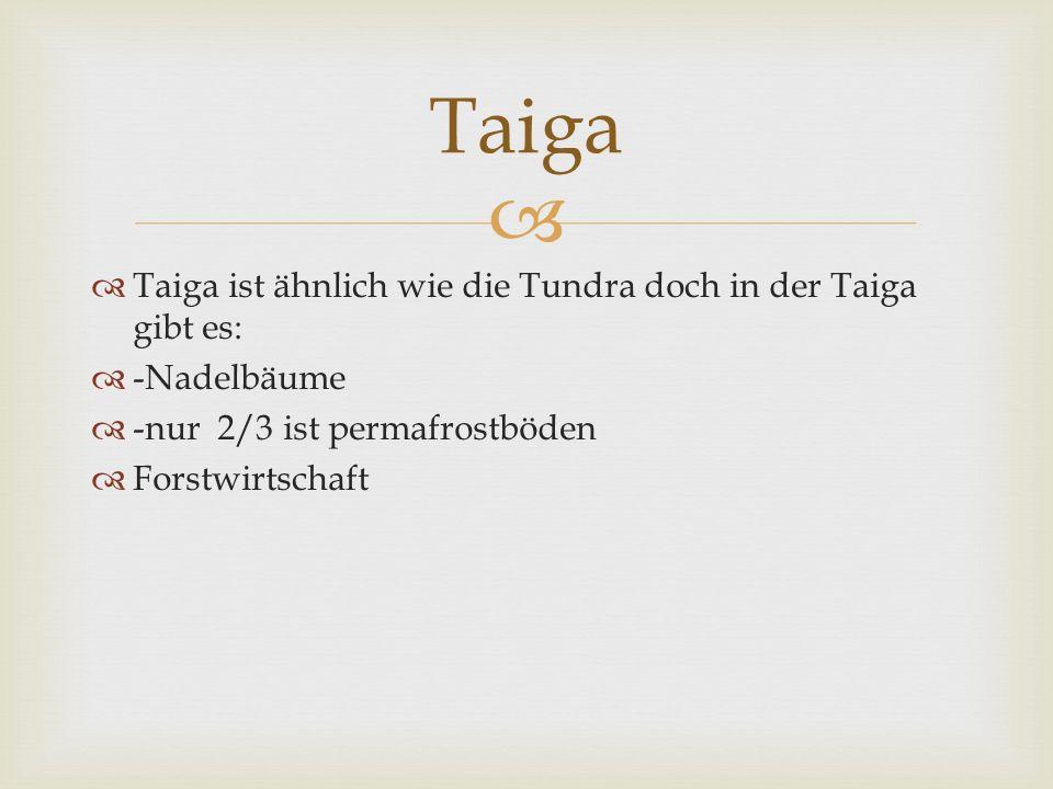 Taiga ist ähnlich wie die Tundra doch in der Taiga gibt es: -Nadelbäume -nur 2/3 ist permafrostböden Forstwirtschaft Taiga
