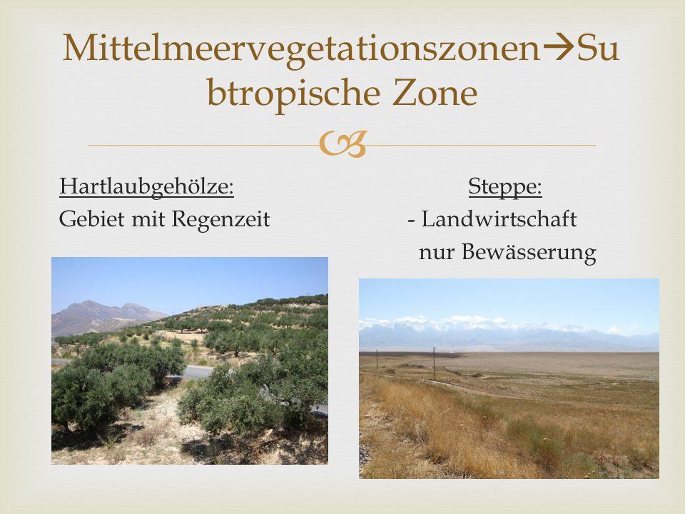 Hartlaubgehölze: Steppe: Gebiet mit Regenzeit - Landwirtschaft nur Bewässerung Mittelmeervegetationszonen Su btropische Zone