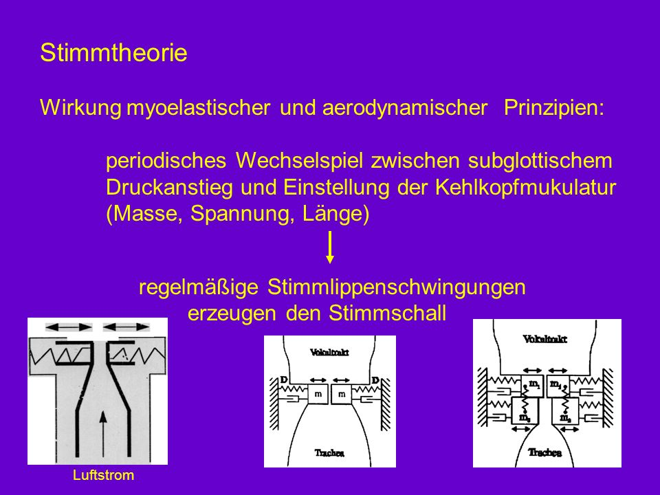Stimmtheorie Wirkung myoelastischer und aerodynamischer Prinzipien: periodisches Wechselspiel zwischen subglottischem Druckanstieg und Einstellung der