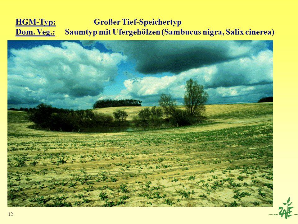 12 HGM-Typ: Großer Tief-Speichertyp Dom. Veg.: Saumtyp mit Ufergehölzen (Sambucus nigra, Salix cinerea)