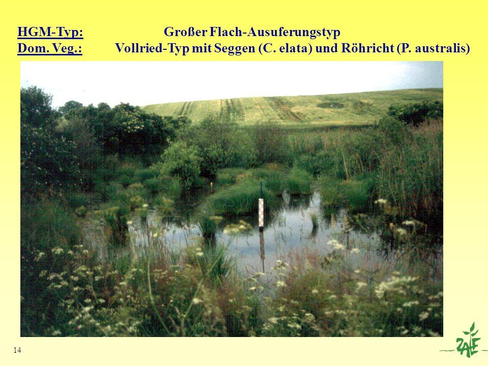 14 HGM-Typ: Großer Flach-Ausuferungstyp Dom. Veg.: Vollried-Typ mit Seggen (C. elata) und Röhricht (P. australis)