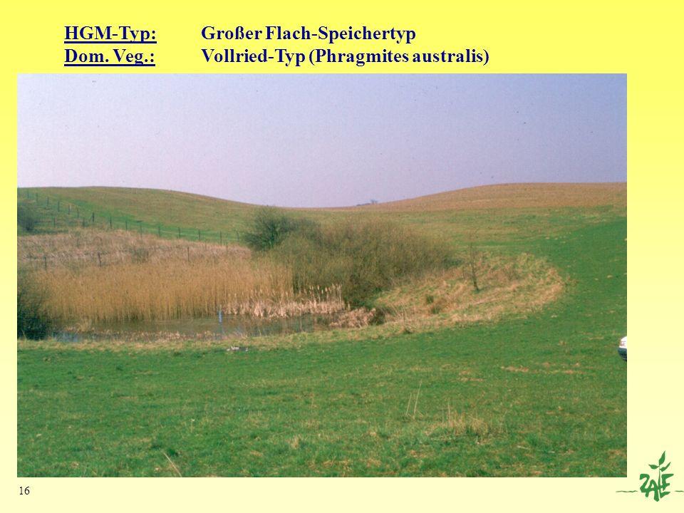 16 HGM-Typ:Großer Flach-Speichertyp Dom. Veg.: Vollried-Typ (Phragmites australis)