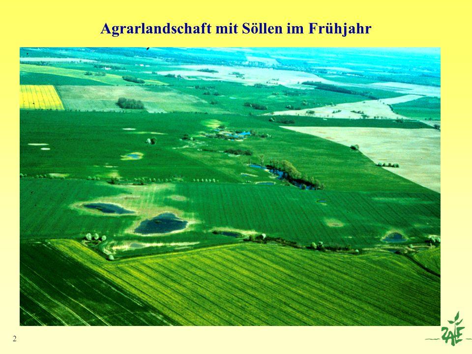 13 HGM-Typ: Kleiner Flach-Ausuferungstyp Dom.Veg.: Saumtyp mit Rohrglanzgras-Röhricht (P.