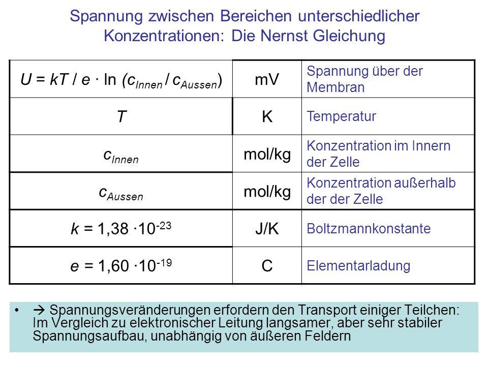 Spannung zwischen Bereichen unterschiedlicher Konzentrationen: Die Nernst Gleichung Spannungsveränderungen erfordern den Transport einiger Teilchen: Im Vergleich zu elektronischer Leitung langsamer, aber sehr stabiler Spannungsaufbau, unabhängig von äußeren Feldern U = kT / e · ln (c Innen / c Aussen )mV Spannung über der Membran TK Temperatur c Innen mol/kg Konzentration im Innern der Zelle c Aussen mol/kg Konzentration außerhalb der der Zelle k = 1,38 ·10 -23 J/K Boltzmannkonstante e = 1,60 ·10 -19 C Elementarladung