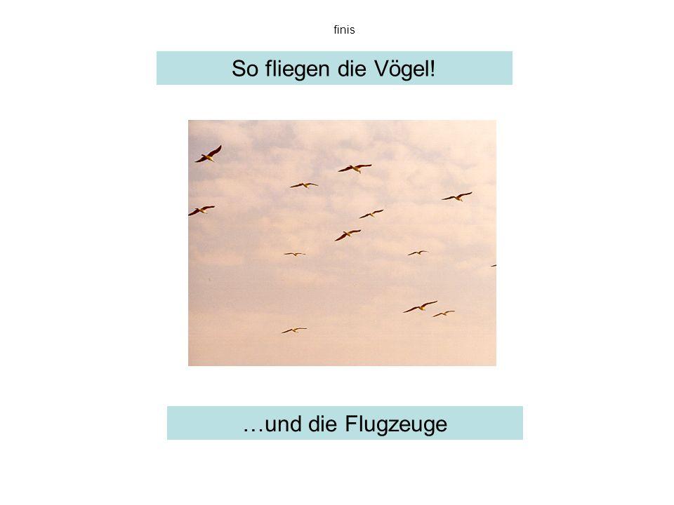So fliegen die Vögel! …und die Flugzeuge finis