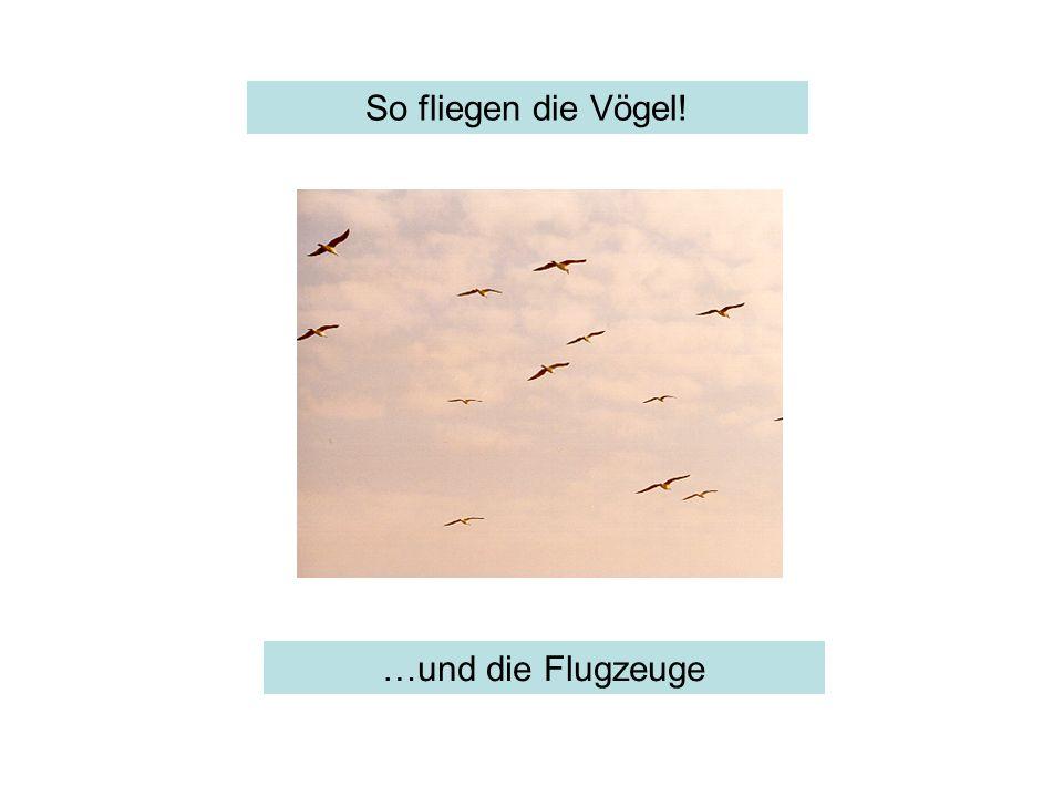 So fliegen die Vögel! …und die Flugzeuge