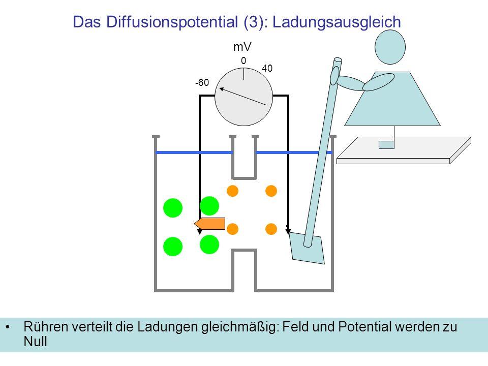 Das Diffusionspotential (3): Ladungsausgleich Rühren verteilt die Ladungen gleichmäßig: Feld und Potential werden zu Null mV -60 40 0