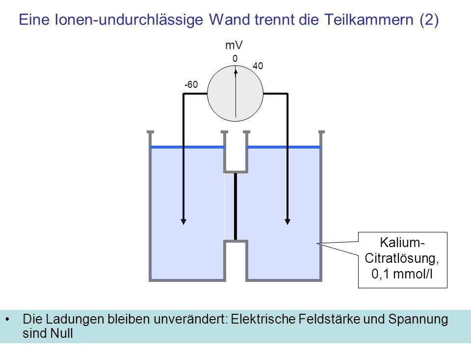 Eine Ionen-undurchlässige Wand trennt die Teilkammern (2) Die Ladungen bleiben unverändert: Elektrische Feldstärke und Spannung sind Null mV -60 Kaliu