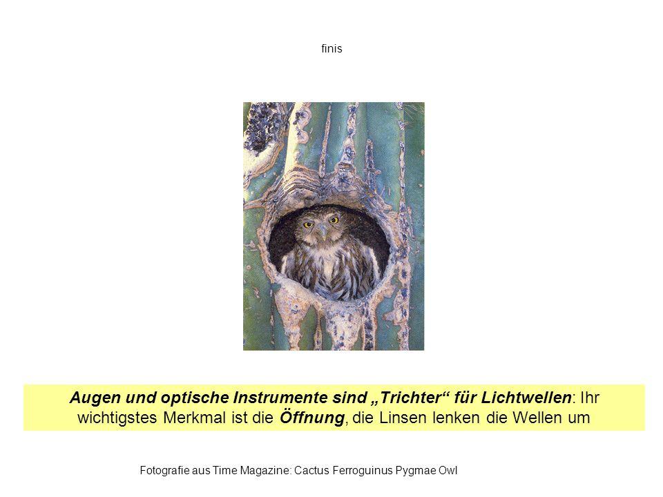 finis Fotografie aus Time Magazine: Cactus Ferroguinus Pygmae Owl Augen und optische Instrumente sind Trichter für Lichtwellen: Ihr wichtigstes Merkma
