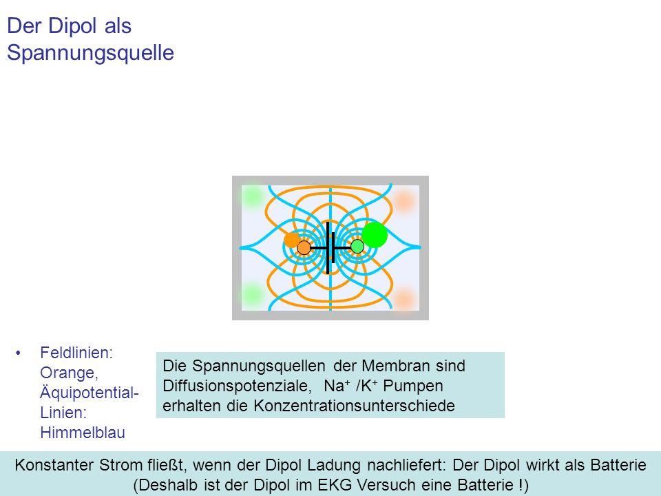 Feldlinien: Orange, Äquipotential- Linien: Himmelblau Der Dipol als Spannungsquelle Konstanter Strom fließt, wenn der Dipol Ladung nachliefert: Der Di
