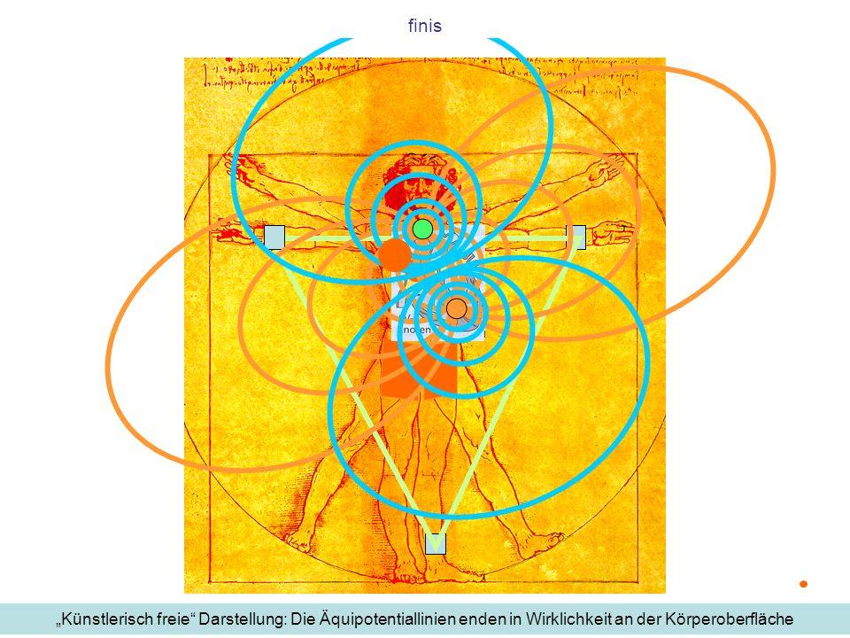 finis Künstlerisch freie Darstellung: Die Äquipotentiallinien enden in Wirklichkeit an der Körperoberfläche