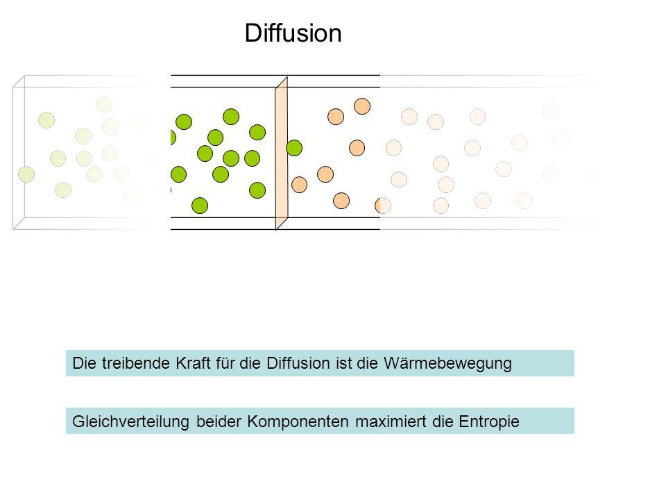 Diffusion Gleichverteilung beider Komponenten maximiert die Entropie Die treibende Kraft für die Diffusion ist die Wärmebewegung