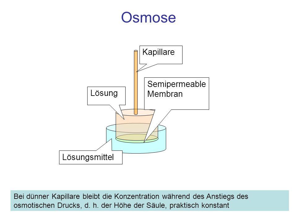 Osmose Lösungsmittel Lösung Kapillare Semipermeable Membran Bei dünner Kapillare bleibt die Konzentration während des Anstiegs des osmotischen Drucks,
