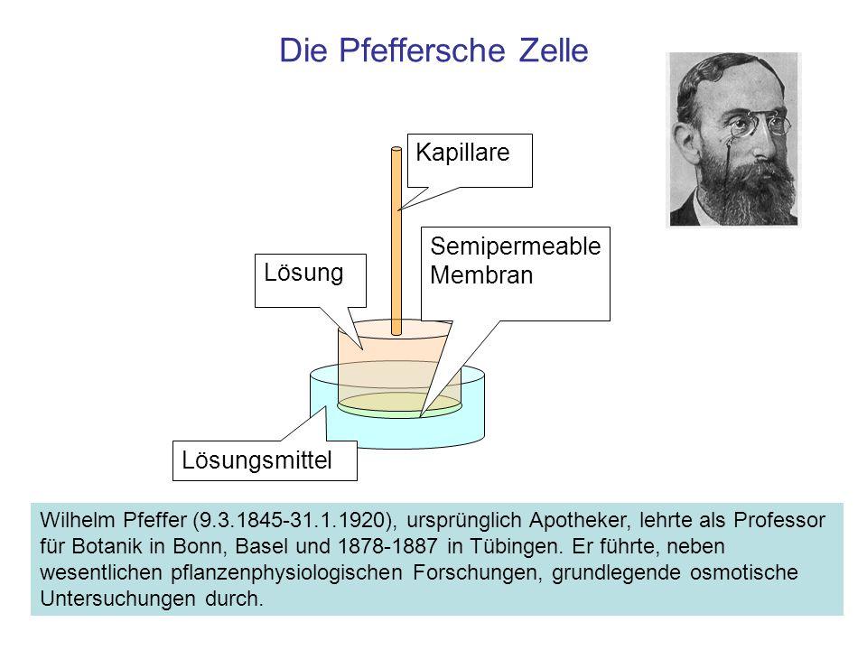Die Pfeffersche Zelle Lösungsmittel Lösung Kapillare Semipermeable Membran Wilhelm Pfeffer (9.3.1845-31.1.1920), ursprünglich Apotheker, lehrte als Pr