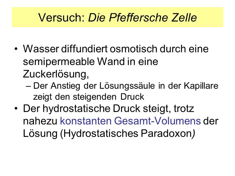 Versuch: Die Pfeffersche Zelle Wasser diffundiert osmotisch durch eine semipermeable Wand in eine Zuckerlösung, –Der Anstieg der Lösungssäule in der K