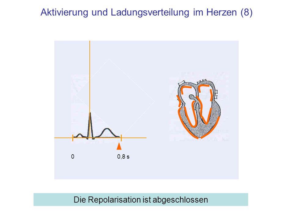 Aktivierung und Ladungsverteilung im Herzen (8) Die Repolarisation ist abgeschlossen 00,8 s